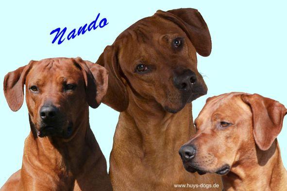 3-mal-Nando-Kopf Web2